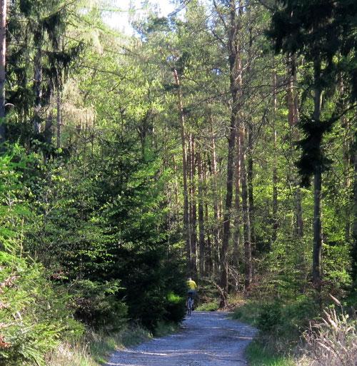 Strmá lesní cesta na brdský hřeben, výška 492 m