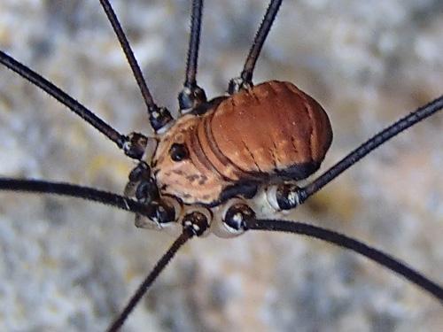 Pavouků a jiných roztomilých zvířátek tam bylo opravdu spousta. Sekáči byli prakticky všude.
