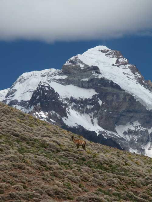 Lama a Aconcagua