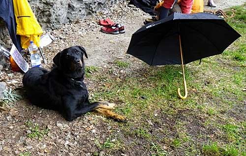 Počasí, že by ani psa nevyhnal.