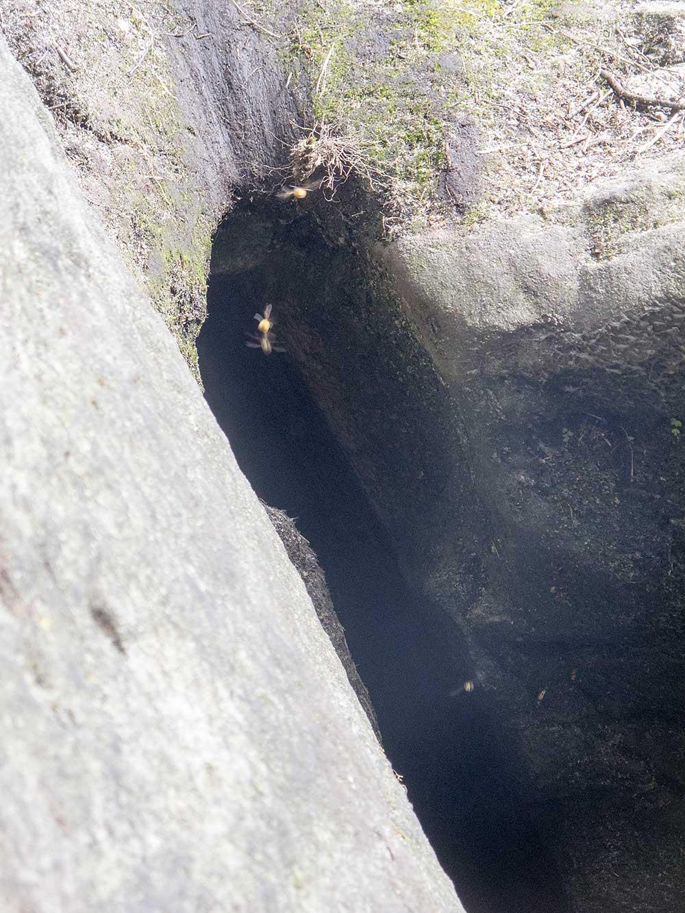 Cesta začíná u skuliny s vosím hnízdem