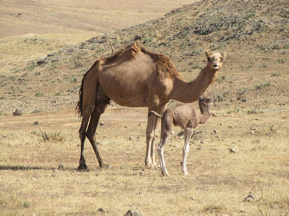Omán 3