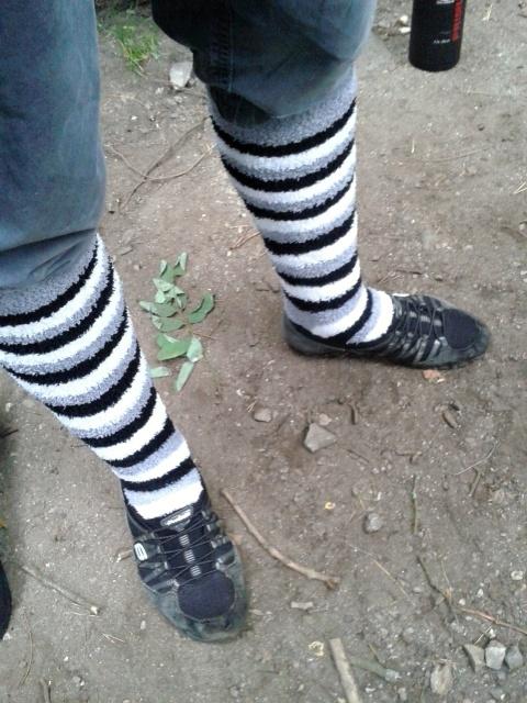 Dneska už leze každá zebra