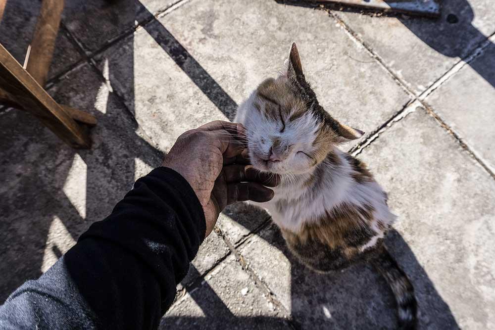 Místní kočka v orgasmu